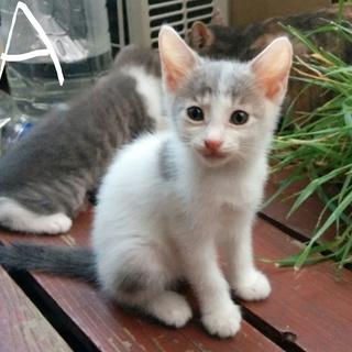 元気いっぱいの子猫ちゃん,家族に迎えて!