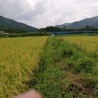 畦の草刈り・稲刈り・籾摺りに関する作業