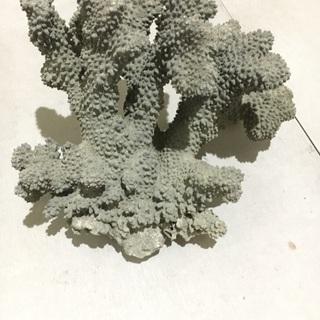 置物、サンゴ
