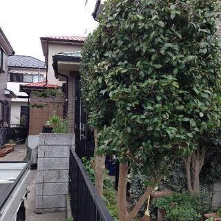 敷地からはみ出し近隣ご迷惑になっている植木/庭木のお手入れ 剪定...