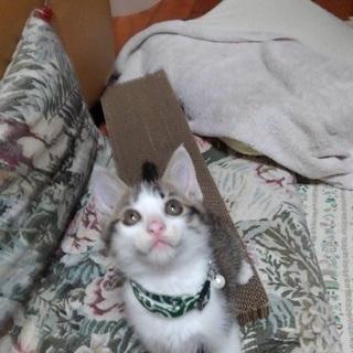 生後2ヶ月の子猫の里親さん探してます‼️
