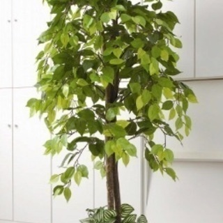 手入れのいらない手軽な観葉植物!お部屋の雰囲気作りに最適!