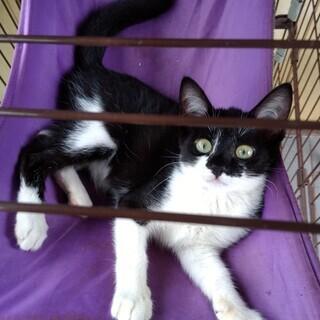 度会町の子猫 推定3.5ヶ月 男の子
