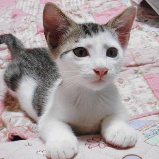 尻尾の長い生後2か月の猫。