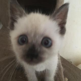 可愛い子猫里親募集💕