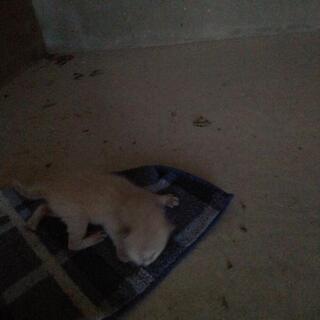 野良猫が育児放棄した赤ちゃんネコ