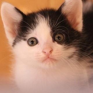 生後2ヶ月子猫です!
