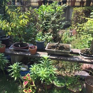 〜取引中〜 盆栽 植木 鉢植え サボテン など