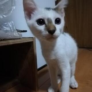 生後3ヶ月の子猫です