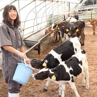 子牛から肥育まで楽しみながら技術の身に就く職場です!