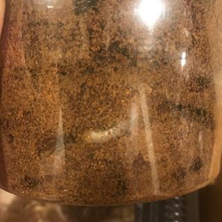 ヘラクレスなどの幼虫多数います