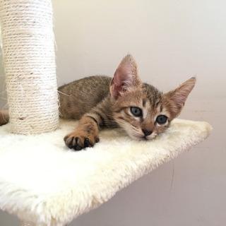 【動物病院 検診済み】仔猫🐈里親を探してます🙇♀️の画像