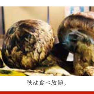 めいぶつ爆食い 2019 松茸スタート