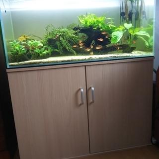 無料で差し上げます 水槽・熱帯魚・水草飼育器材一式