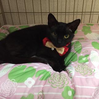 黒猫*ジジコちゃん