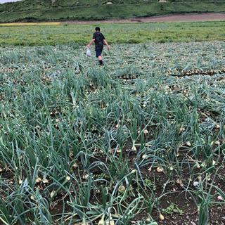 農作業アルバイト募集!日給12000 8時から17時 短期可