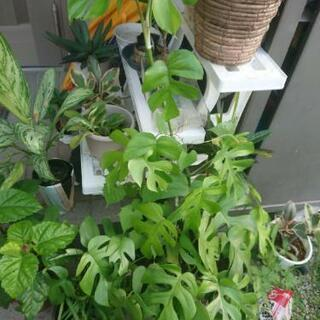 観葉植物交換希望