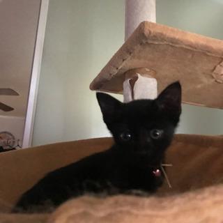 とても可愛い黒猫さん