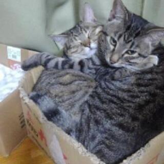 猫砂(ФωФ)