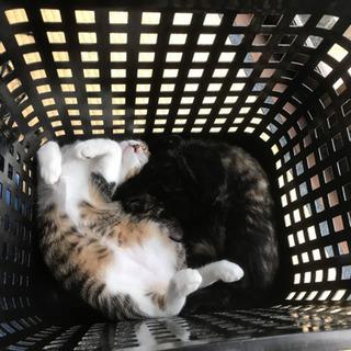 子猫2匹の里親募集になります