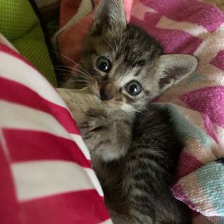 可愛い三姉妹の子猫ちゃんの里親さんになってください😸