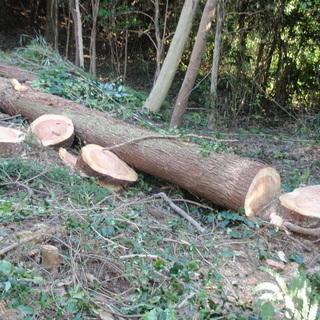 木の伐採 大木から細木までOK! スピーディに綺麗にします!