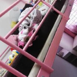 取引中★ピンクのロフトベッド