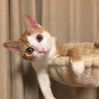 人懐っこい子猫ちゃんです。