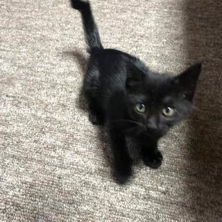 黒猫★メス