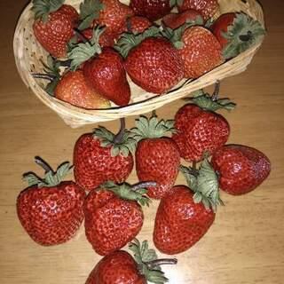 食品サンプル いちご 苺 イチゴ