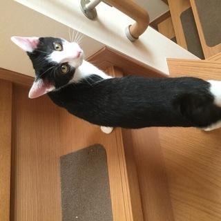 【里親さん募集】白黒子猫♂(4か月)少し大きくなりました✿