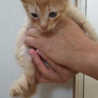 母猫の里親を募集しています - 羽島郡