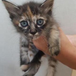 母猫の里親を募集しています − 岐阜県