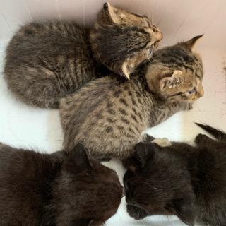決定致しました生後2週間位確実に育ててくれる方 野良猫赤ちゃん