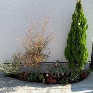 庭木のお困りごとはグリーンアップガーデンが承ります!東京23区、...
