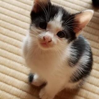 子猫の里親募集 - 猫