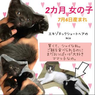 再募集です。成猫2匹、子猫2匹