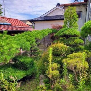 植木の剪定、宅地の除草、防草シート等