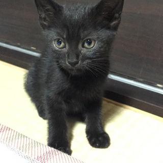 生後4か月目★黒子猫さん女の子