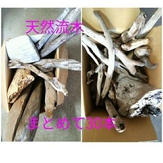 m【天然流木まとめて2箱!! 大小30本】乾燥流木 ディスプレイ...
