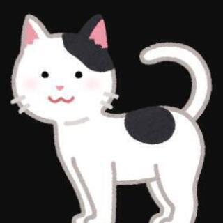 緊急!!野良子猫