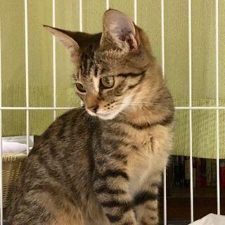 大人の猫ちゃんにひっついて頑張っていた捨て猫ちゃん。3〜4ヶ月。メス − 熊本県