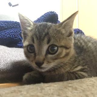 【生後2〜3ヶ月】子猫を保護しています。