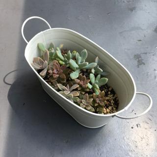 【0円】多肉植物4