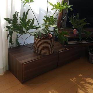 観葉植物セロームSALE!