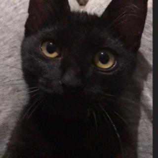 【里親さま決定】甘えん坊の黒猫の男の子☆推定4ヶ月