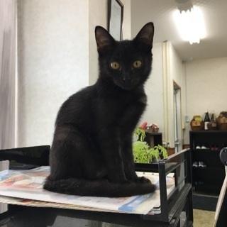 人懐っこいメスの黒猫ちゃん^_^