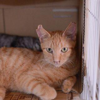 緊急です 9月15日強制退去の部屋にいる茶トラ君 - 猫