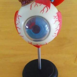 眼球のプラモデル