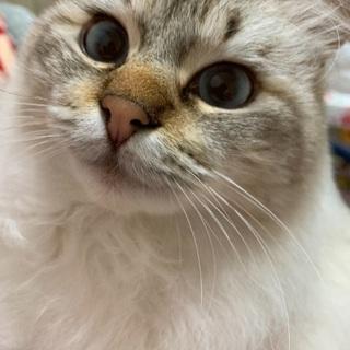 3歳くらいの猫ちゃんの里親さん募集です